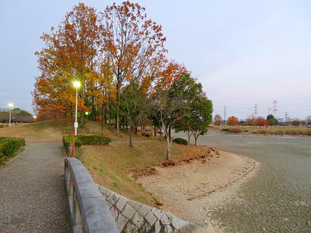 水抜きした状態の秋の落合公園 - 11