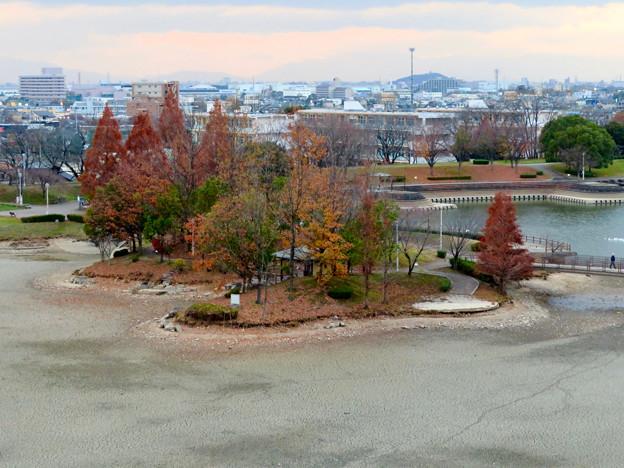 落合公園水の塔から見下ろした池干し中の落合池 - 2