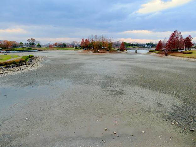 落合公園水の塔から見下ろした池干し中の落合池 - 3