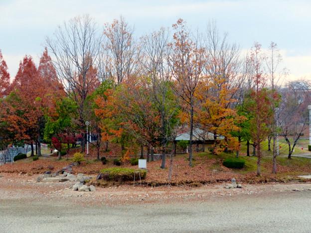 落合公園水の塔から見下ろした池干し中の落合池 - 5
