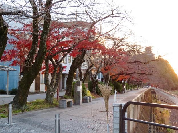 木曽川沿いの並木の紅葉 - 1