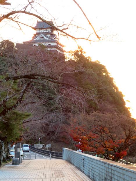 木曽川沿いの並木の紅葉 - 4