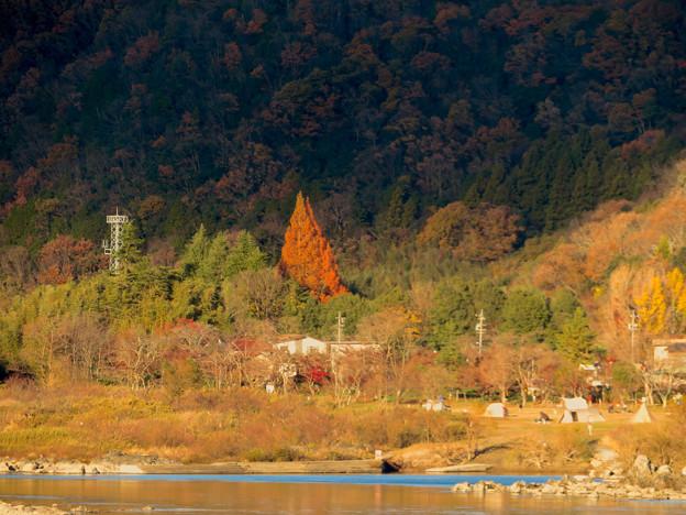 桃太郎神社辺りにあると思われる大きな赤い紅葉した木 - 2