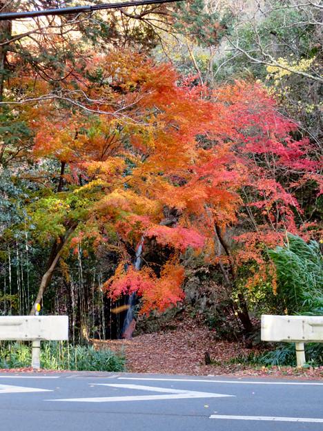 不老滝前の紅葉した木々 - 2
