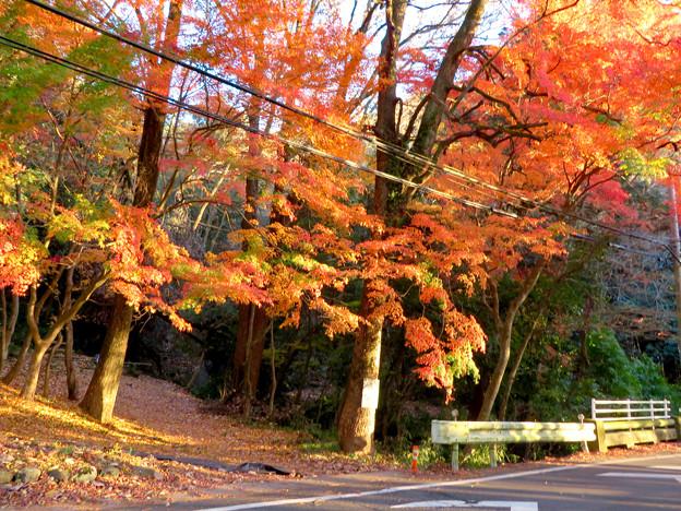 不老滝前の紅葉した木々 - 5