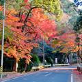 不老滝前の紅葉した木々 - 6