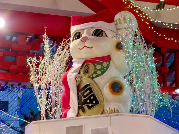 大須商店街:招き猫広場のクリスマスイルミネーション 2018 No - 4