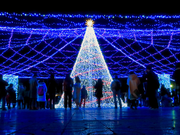 名古屋港ガーデンふ頭:臨港緑園のクリスマスイルミネーション 2018 No - 8