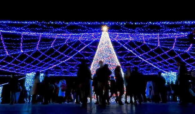 名古屋港ガーデンふ頭:臨港緑園のクリスマスイルミネーション 2018 No - 11