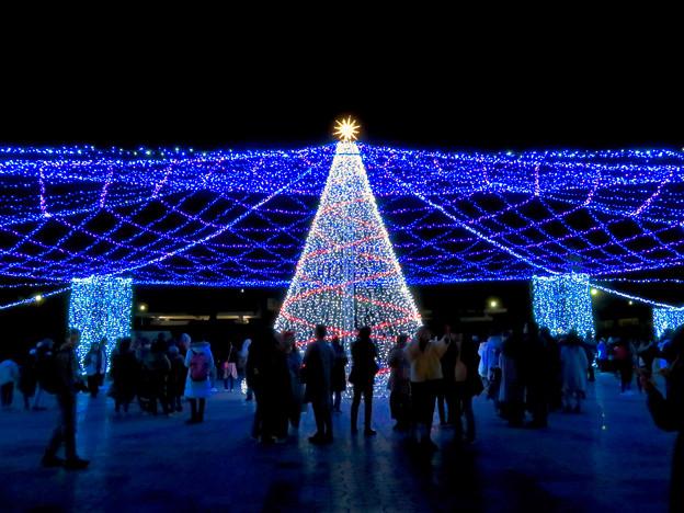 名古屋港ガーデンふ頭:臨港緑園のクリスマスイルミネーション 2018 No - 12