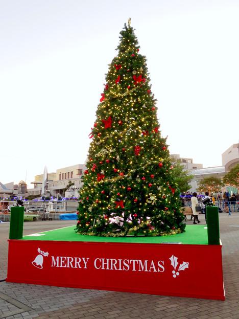 名古屋港ガーデンふ頭:JETTY前のクリスマスツリー