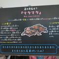 名古屋港水族館「へんカワ展」No - 37:マタマタの説明