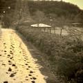 まだ雪が残っていた定光寺公園沿いの歩道 - 2