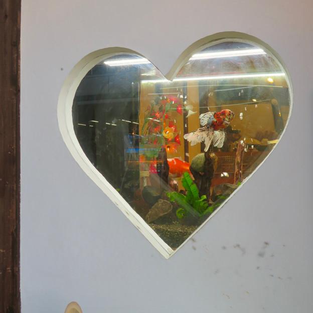 犬山城下町:ハート型の水槽を兼ねた窓 - 1