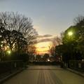 朝宮公園入り口の夕焼け - 1