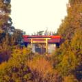 Photos: 真下から見上げた尾張白山社 - 4