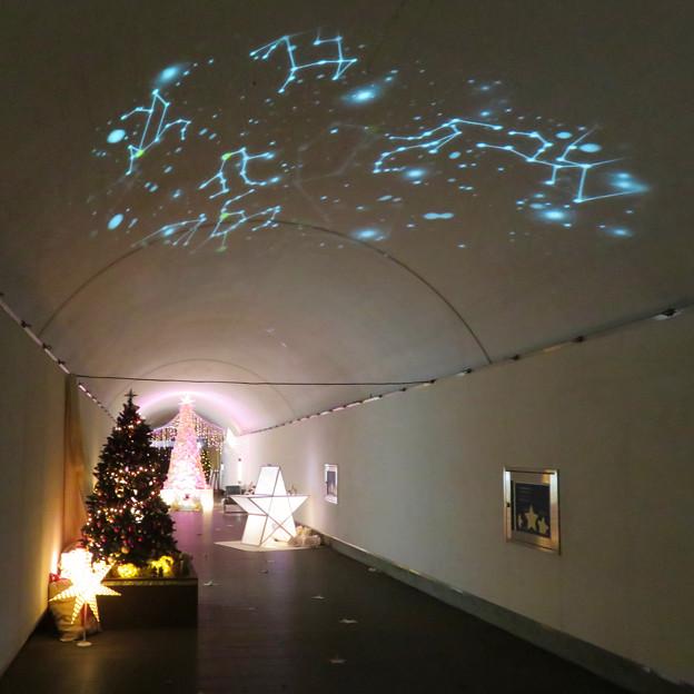 花フェスタ記念公園:トンネルギャラリー「トンネル・イルミネーション 2019」 - 4(天井に星空)