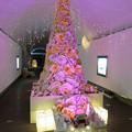 Photos: 花フェスタ記念公園:トンネルギャラリー「トンネル・イルミネーション 2019」 - 9(ローズタワー)