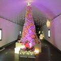 花フェスタ記念公園:トンネルギャラリー「トンネル・イルミネーション 2019」 - 10(ローズタワー)