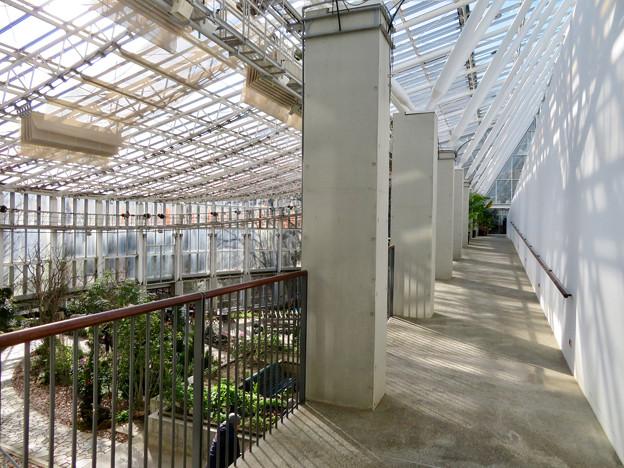 花フェスタ記念公園:花の地球館 - 15(大温室)