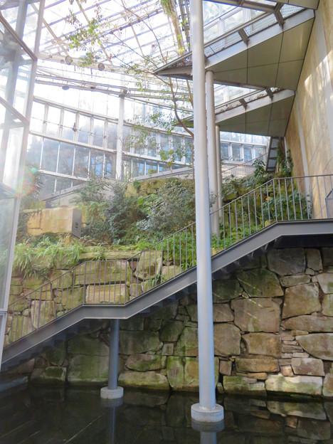 花フェスタ記念公園:花の地球館 - 20(大温室)