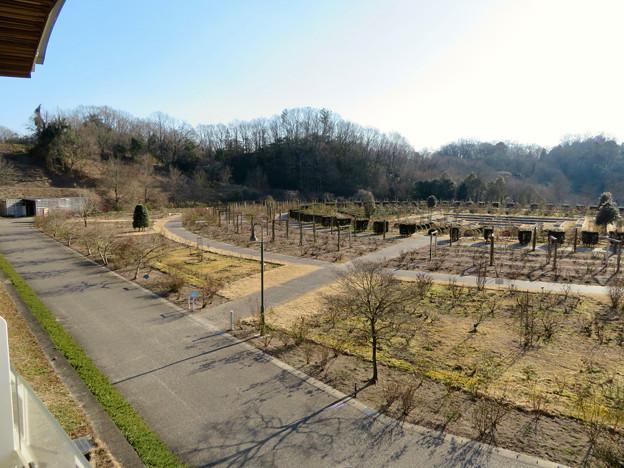 オフシーズン(2月)の花フェスタ記念公園 - 57:バラのベルベデーレ(展望デッキ)