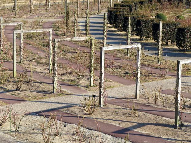 オフシーズン(2月)の花フェスタ記念公園 - 63:バラのベルベデーレ(展望デッキ)