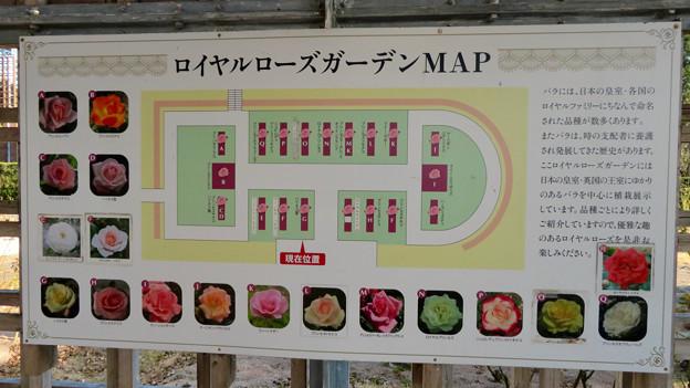 オフシーズン(2月)の花フェスタ記念公園 - 69:ロイヤルローズガーデン(マップ)