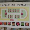 Photos: オフシーズン(2月)の花フェスタ記念公園 - 69:ロイヤルローズガーデン(マップ)
