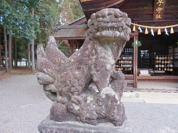 子守神社 - 17:狛犬
