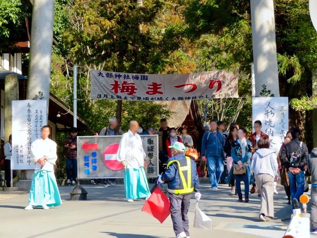 梅が満開だった大縣神社 2019 - 2