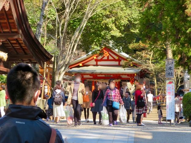 梅が満開だった大縣神社 2019 - 4