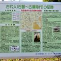 Photos: 鳴海杻(なるみてがし)神社 - 16:古代人(石器~古墳時代)の足跡(解説)