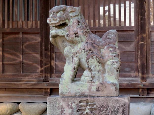 鳴海杻(なるみてがし)神社 - 24:狛犬