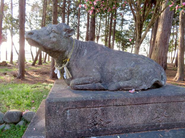 鳴海杻(なるみてがし)神社 - 28:牛の像