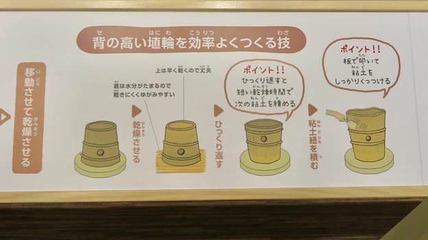しだみ古墳群ミュージアム「SHIDAMU(しだみゅー)」展示室 No- 50:埴輪づくりの解説