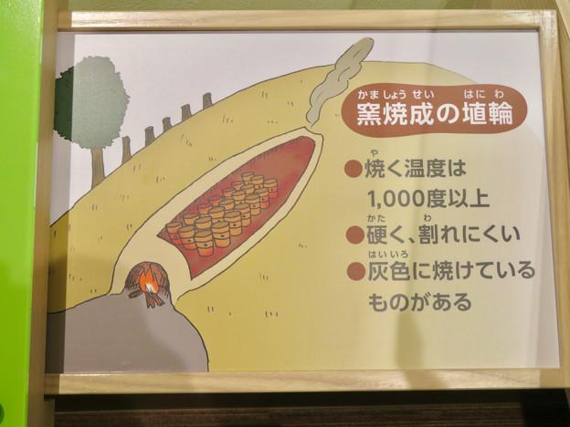 しだみ古墳群ミュージアム「SHIDAMU(しだみゅー)」展示室 No- 57:窯焼成の埴輪の説明