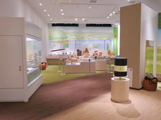 しだみ古墳群ミュージアム「SHIDAMU(しだみゅー)」展示室 No- 77:展示室出口付近から見た内部