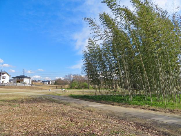 志段味古墳群 No - 6:歩道横の竹林