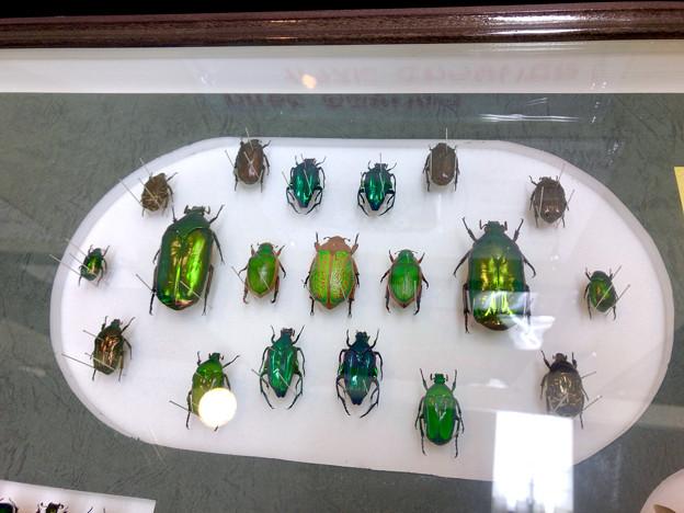 ツインアーチ138:アートする昆虫展 No - 4