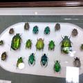 Photos: ツインアーチ138:アートする昆虫展 No - 4