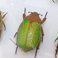 Photos: ツインアーチ138:アートする昆虫展 No - 5