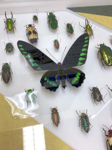 ツインアーチ138:アートする昆虫展 No - 6