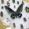 Photos: ツインアーチ138:アートする昆虫展 No - 6