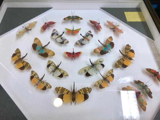 Photos: ツインアーチ138:アートする昆虫展 No - 8(美しい姿をしたテングビワハゴロモ)
