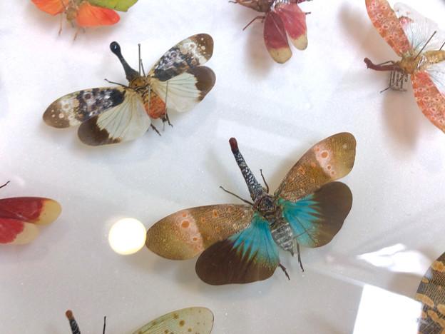 ツインアーチ138:アートする昆虫展 No - 11(美しい姿をしたテングビワハゴロモ)