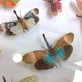 Photos: ツインアーチ138:アートする昆虫展 No - 11(美しい姿をしたテングビワハゴロモ)