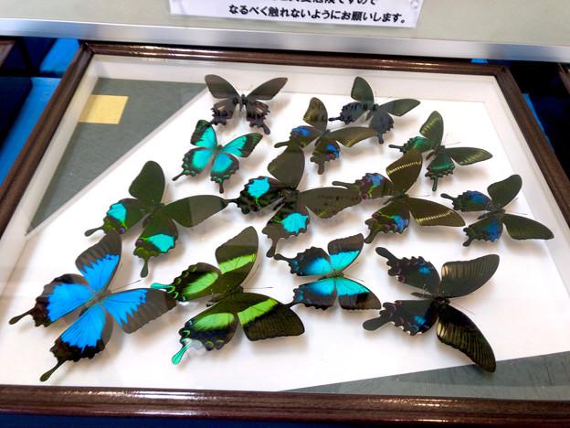 ツインアーチ138:アートする昆虫展 No - 15