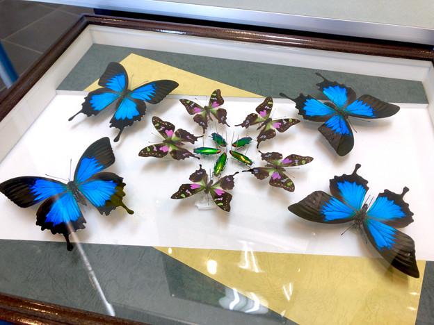 ツインアーチ138:アートする昆虫展 No - 16