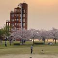 満開だった落合公園の桜(2019年4月7日) - 7